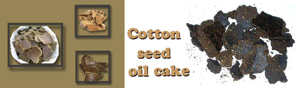 Cottonseed Oil Cake Specification